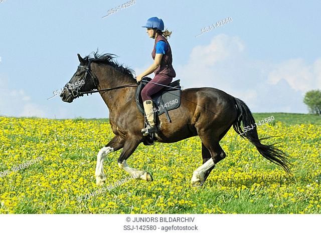 Young rider on back of a Lewitz pony galloping in a flower meadow
