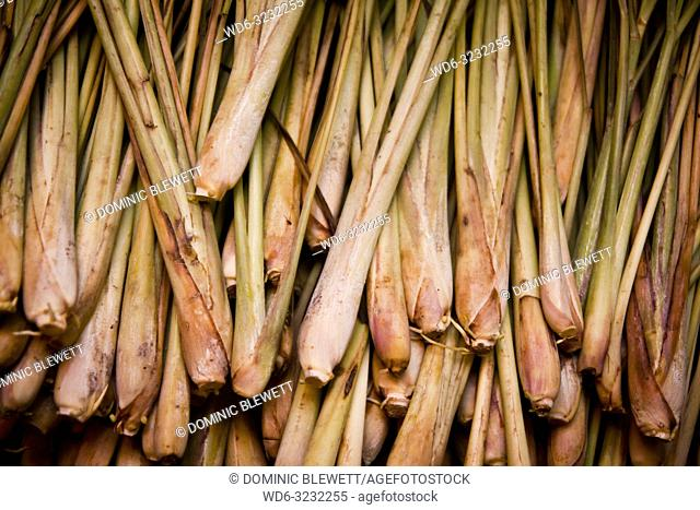 Fresh lemongrass stems for sale at a market stall during the night at Long Bien Market in Hanoi, Vietnam