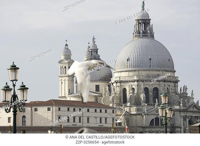 Venice, Veneto, Italy: Basilica Santa Maria della Salute from St Marks square