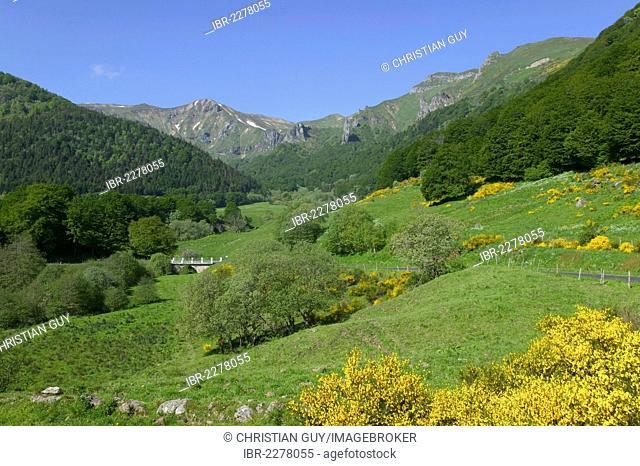 Chaudefour Valley Natural Reserve, Sancy montain, Monts Dore, Auvergne Volcanoes Natural Park, Puy de Dome, Auvergne, France, Europe