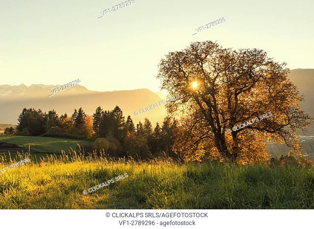 Italy, Trentino Alto Adige, sunset on prairies of Non valley in a autumn day