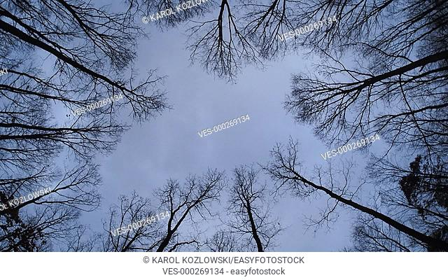 Autumn Trees and Cloudy Sky Rotating