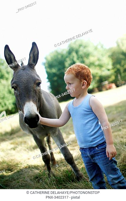 Red-haired little boy in a field looking at a donkey while stroking him