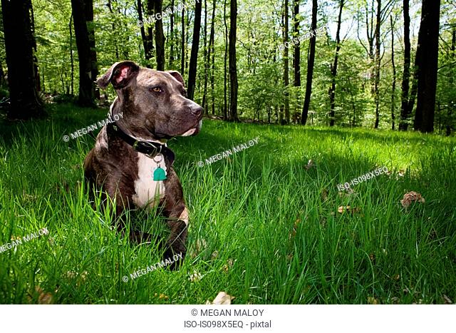 Dog sitting in grass in forest