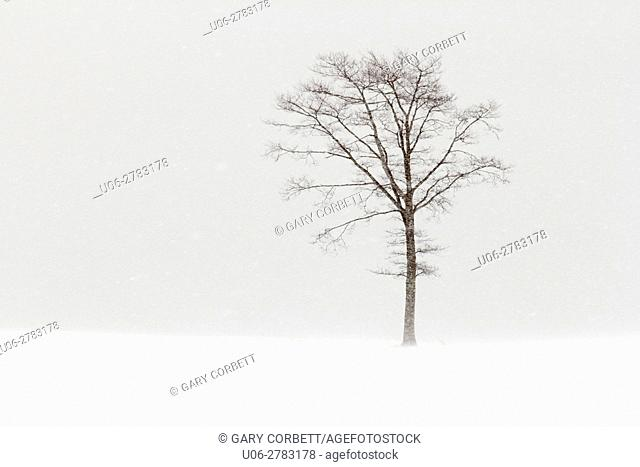 a tree on a field in a snow storm