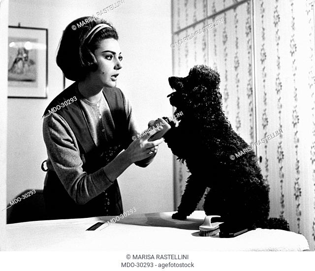 Sylva Koscina with her poodle. Yugoslavian-born Italian actress Sylva Koscina combing her poodle. 1964
