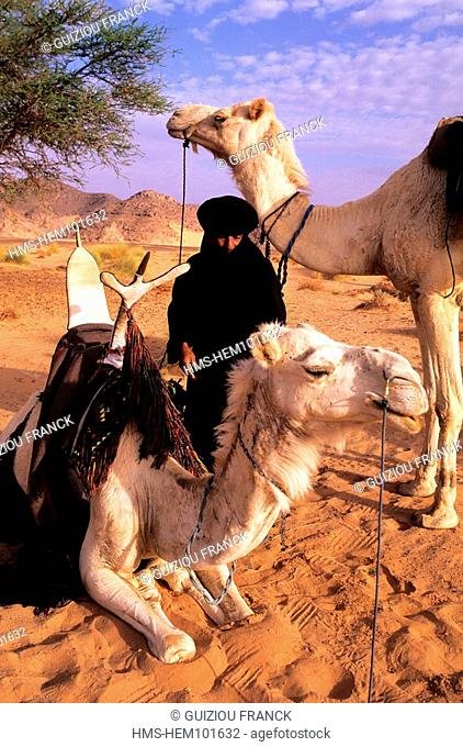 Libya, the Sahara, tuareg camel driver in the Akakus massif