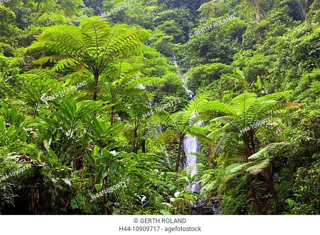 Madakaripura, Indonesia, Asia, Java, primeval forest, jungle, rain forest, nature, gulch, rock, cliff, waterfalls, trees, ferns