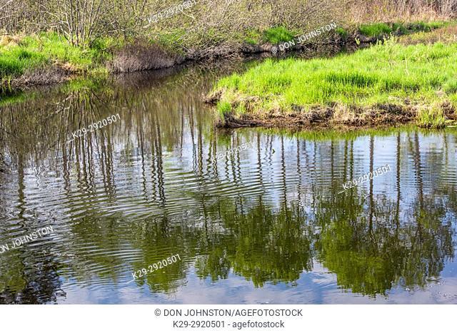 Spring reflections in Fairbank Creek, Greater Sudbury, Ontario, Canada