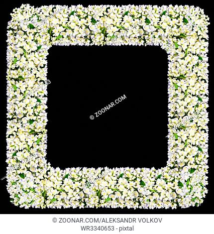 The mourning cemeterial square frame from white jasmine flowers. Isolated on black abstract collage