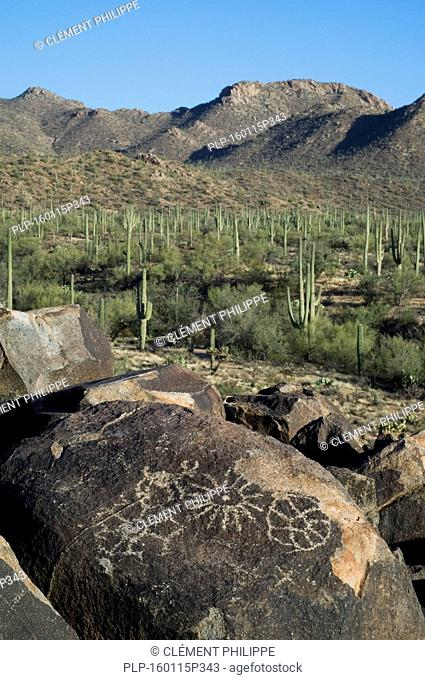 Rock art at Signal Hill in the Tucson Mountains, created by the Hohokam Indians, showing geometrical shaped petroglyphs, Saguaro National Park, Arizona, US