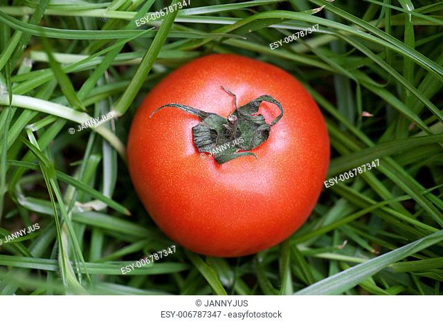red juicy tomato on a background of green grass