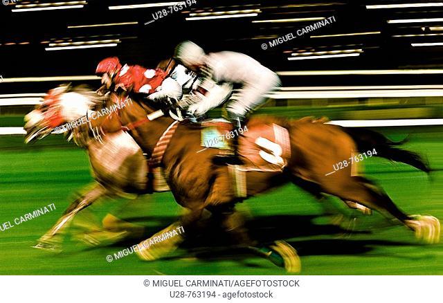 Horse race at racetrack, Istanbul. Turkey