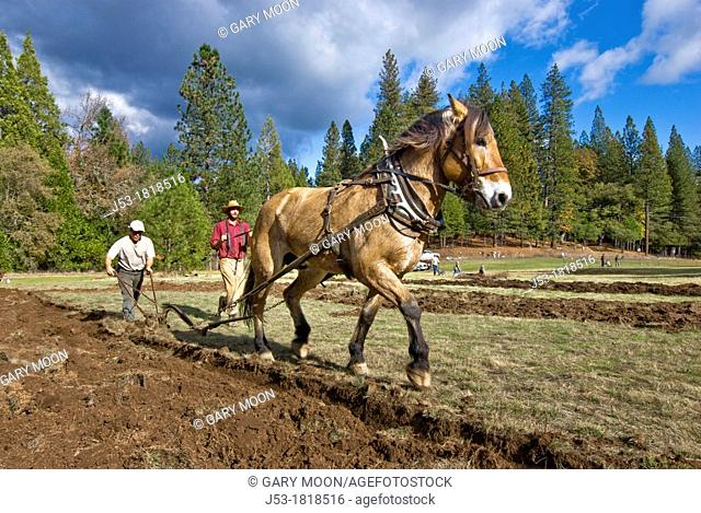 Using draft horse to plow pasture into cropland, Burton Ranch, Nevada City, California