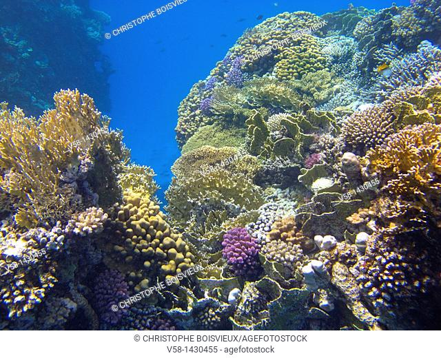Egypt, Marsa Alam region, Coral reef