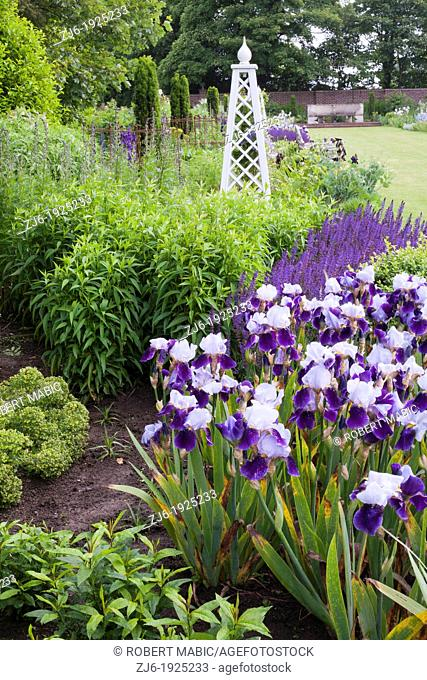 Spring borders in traditional country garden, Kent England. Purple and blue borders with irises in blooms in early summer
