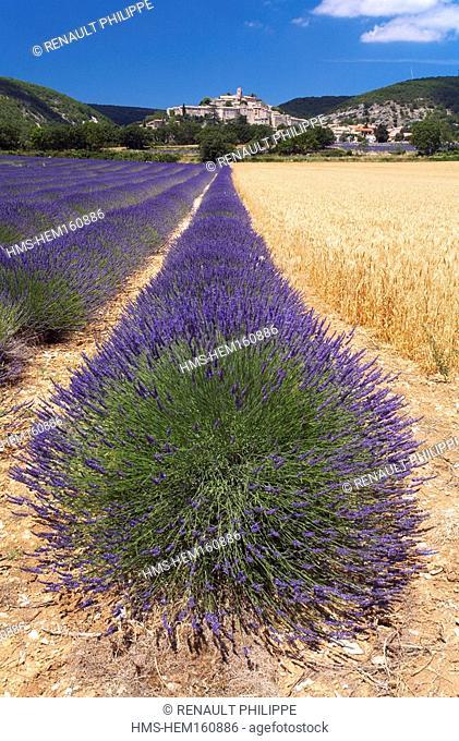 France, Alpes de Haute Provence, Provence, Banon and its lavender fields