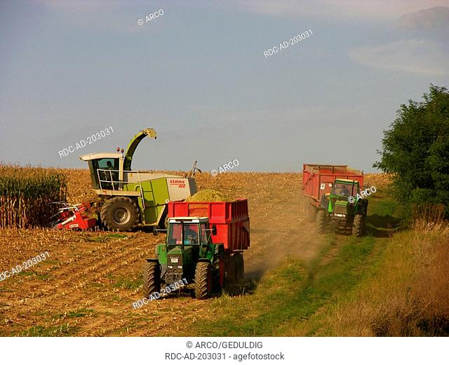 Maize harvest, Baden-Wurttemberg, Germany, Zea mays, Corn, tractor
