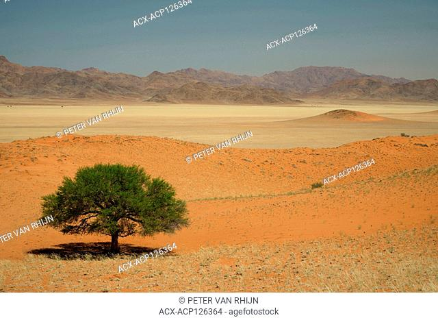 The layered landscape of the Namib Rand Nature Reserve at Wolwedans Dune Lodge. The layered apperance results from the longitudinal red dunes and mixed spars...