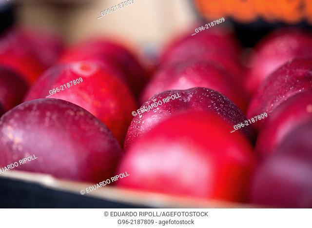 Nectarine fruit at fruit processing factory. Spain