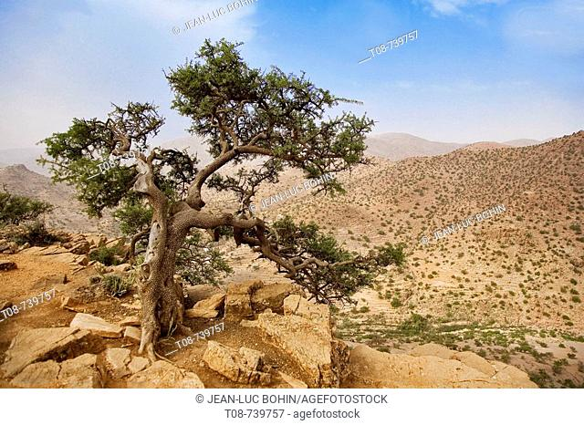 Morocco, southern Anti-Atlas mountains and argan