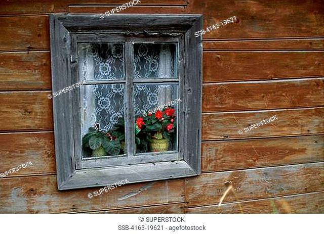 RUSSIA, VLADIVOSTOK, WINDOW OF OLD WOODEN HOUSE