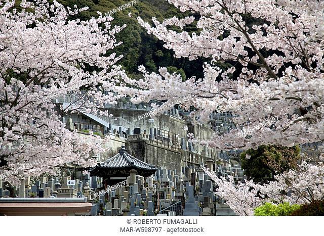 cemetery, graveyard during cherry blossom season. Maruyama-koen park, Kyoto, Japan