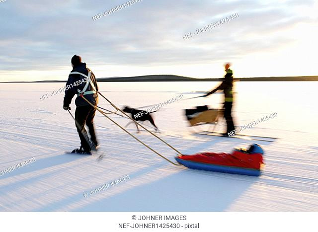 Woman dog sledding and man ice skating