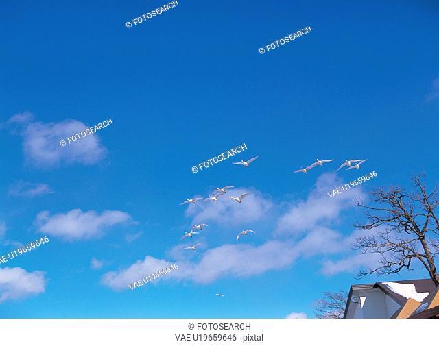 sky, animal, scenery, nature, bird, film
