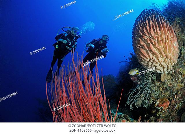 Divers with red gorgonia and tons sponge