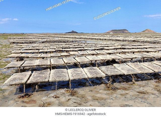 France, Cotes d'Armor, Plouezec, Bay of Paimpol, oyster farm on tables