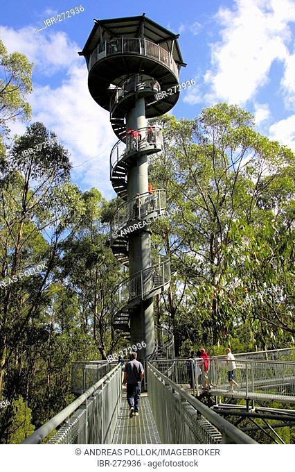 Otway Fly Tree Top Walk in the rainforest, Victoria, Australia
