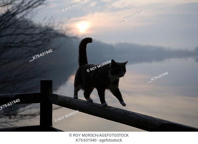 Cat walking on rail