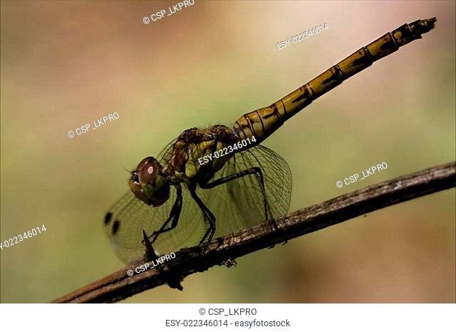 side of yellow black dragonfly