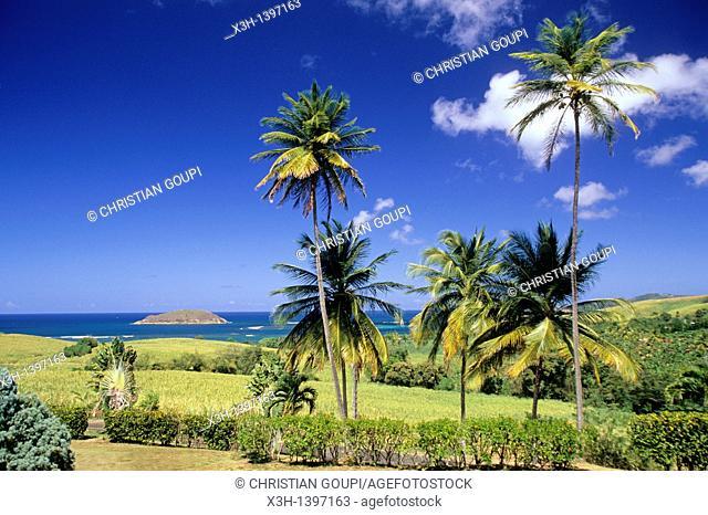 paysage de la cote atlantique entre Sainte-Marie et La Trinite Ile de la Martinique Departement et Region d'Outremer francais Archipel des Antilles...
