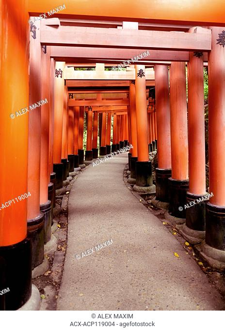 Senbon torii, a long empty path of Vermillion red Torii gates at Fushimi Inari Taisha shrine in Kyoto, Japan 2017