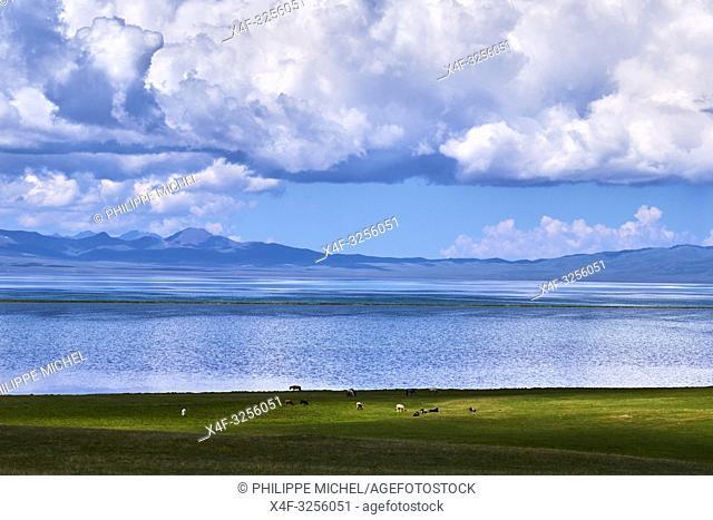 Kirghizistan, province de Naryn, le lac de Song Kol,troupeau de chevaux/ Kyrgyzstan, Naryn province, Song Kol lake, horses herd