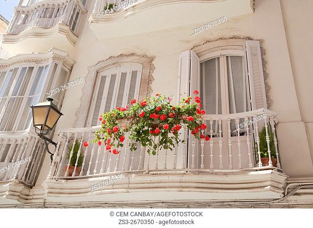 Geranium flowers on the balcony of an old house, Cadiz, Andalusia, Spain, Europe