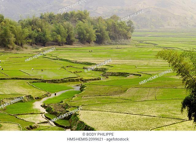 Vietnam, Son La province, Phu Yen, ricefields, White Thai ethnic group or Tai Krao