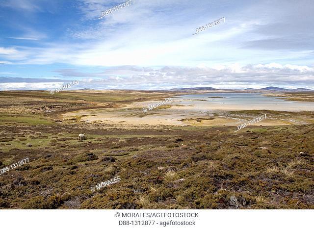 Falkland Islands , Pebble island , landsacpe