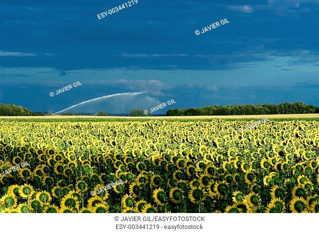 Landscape in Angouleme, Poitou-Charentes, France
