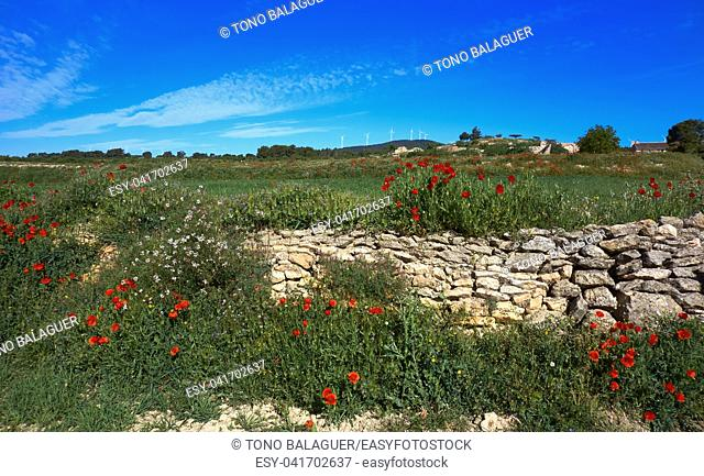 Spring meadow poppies at Camino de Santiago Levante Saint James Way