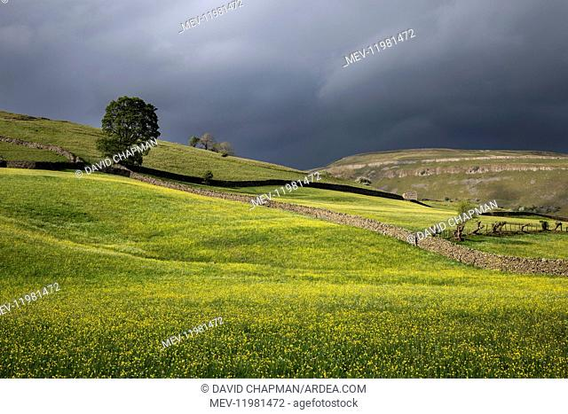 Meadows - Summer - Muker - Swaledale - Yorkshire Dales - UK