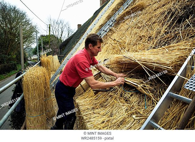 Man thatching a roof, layering and fastening yelms of straw