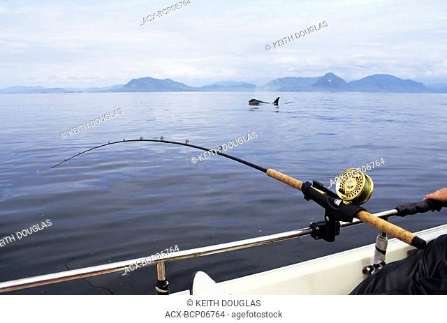Salmon fishing with killer whale swimming by, Work Channel, Prince Rupert, British Columbia, Canada