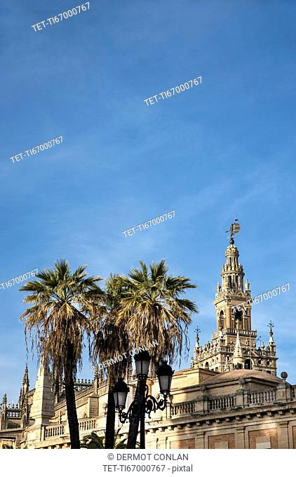 Spain, Andalusia, Seville, Giralda Tower with palm trees in foreground