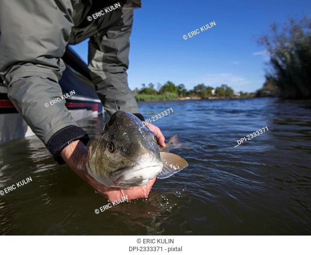 Man holding a redfish (sciaenops ocellatus);Venice louisiana united states of america