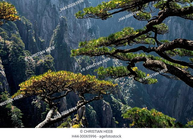 Asia, China, Chinese, Anhui Province, Mount Huangshan , UNESCO , World Heritage, Yellow Mountain, pine tree