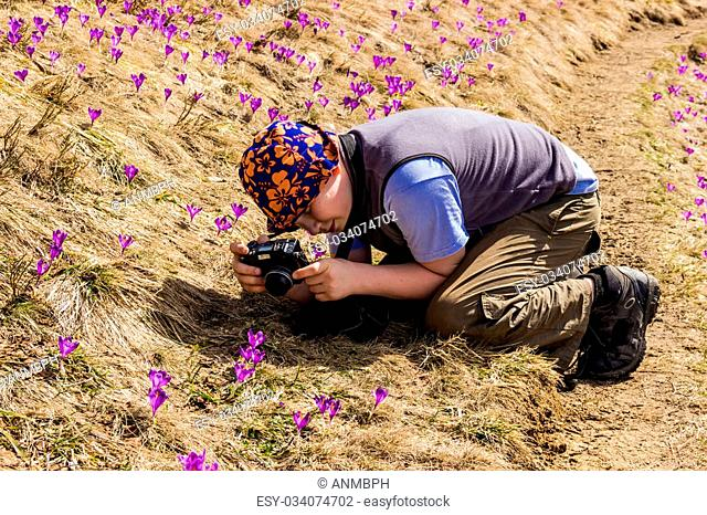Young tourist sitting on knees takes photos of blooming wild crocuses. Carpathians