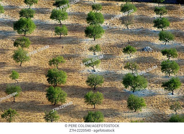 Aerial farmland view